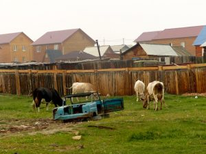 Rural houses in Russia and cows