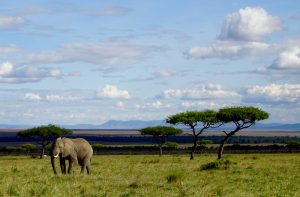 Safari in Africa, a elephant in a beautiful landscape