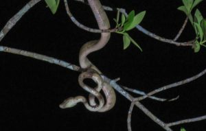 A snake in the Amazon in Ecuador