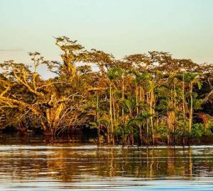 Trees of the Amazon tour in Ecuador while the sun is setting