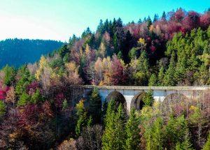 Beautiful colored trees in Transylvania, Romania