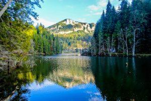Wälder und Berge spiegeln sich in einem See im Norden Rumäniens