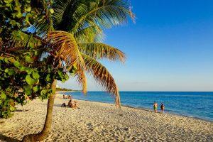 Eine Palme an einem schönen Strand in Trinidad