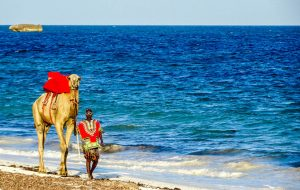 Man with camel in Watamu