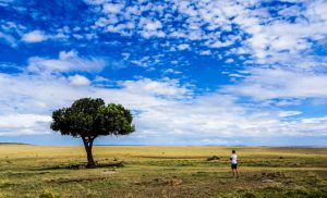 Landscape with one tree in kenya