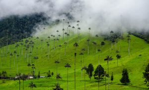 Colombia backpacking journey to Cocora valley