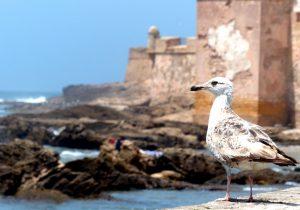 De Küstenstadt Essaouira ist eine Sehenswürdigkeit Marokkos