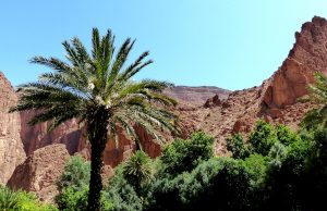 Marokko Sehenswürdigkeiten Oase