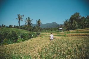 Bali backpacking in the rice terraces in the north