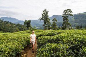 Zu Fuß durch die Nuwara Eliya Teeplantagen