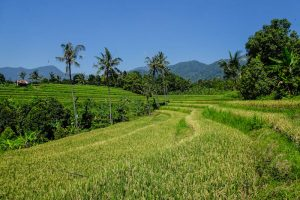 Reisezeit in Bali im Sommer