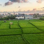 Bali Canggu: 12 Reasons Why You'll love Canggu, Bali!
