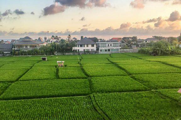 Blick auf die Reisfelder in Canggu Bali