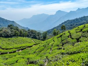 Munnar is a must visit when backpacking around Kerala