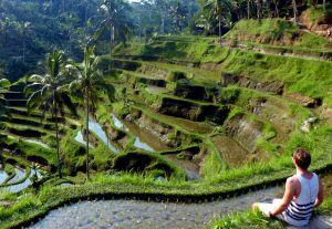 One of the most popular Bali sights for backpackers, the rice terraces in Ubud