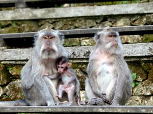 Visiting Bali's monkey forest in Ubud
