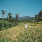 Bali Sehenswürdigkeiten: Die 29 schönsten Orte + Highlights!