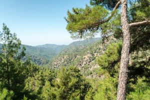 Forest in Paphos with Cyprus Agrotourism