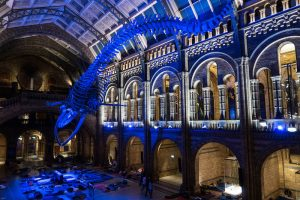 Interessante Orte Londons - Natural History Museum