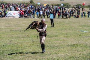 Sportarten mit Adlern