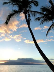 Sunset with palm tree while backpacking Maui
