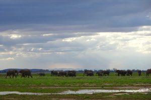Wolkiger Himmel im Amboseli Safari Park