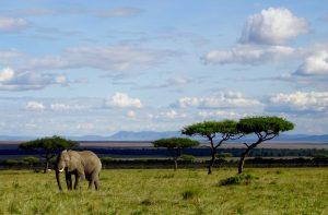 Elefant in der Landschaft von Kenia
