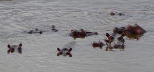 Reisetipps für Kenia zur Sicherheit vor Nilpferden