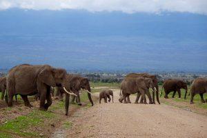 Elefanten bei meiner Safari in Kenia