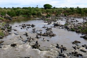 Nach der Great Migration in Kenia