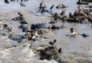 Trauriger Anblick der Leichen im Fluss in Kenia