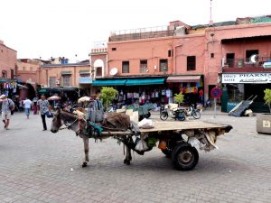 Medina of Marrakech with donkeys