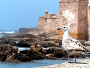 Morocco Backpacking stop in Essaouira