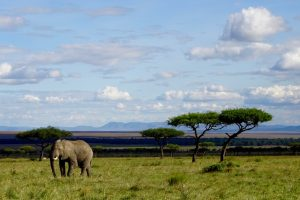 Nationalpark in Kenia