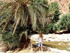 Oase am Fluss in Marokko
