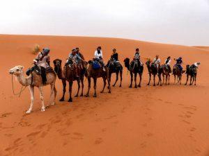 Reisetipps für Marrakesch: Mache eine Wüstentour mit Kamelen