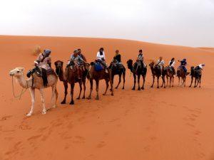 Camel tour in the Sahara