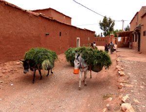 Einheimisches Leben mit Eseln in Marokko