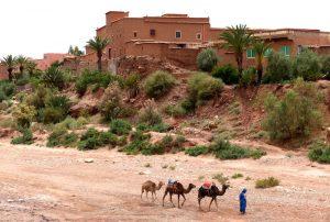 Die Filmstadt Ait Benhaddou im Hintergrund, davor ein Mann mit Kamelen