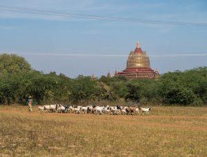 Das Leben in der Bagan archäologischen Zone
