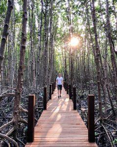 Mangroven Park bei Chanthaburi Thailand
