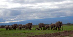 Elefanten im Amboseli Safari Park