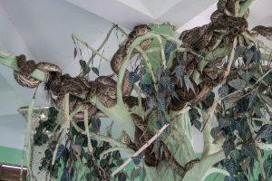 Schlangen im Tempel