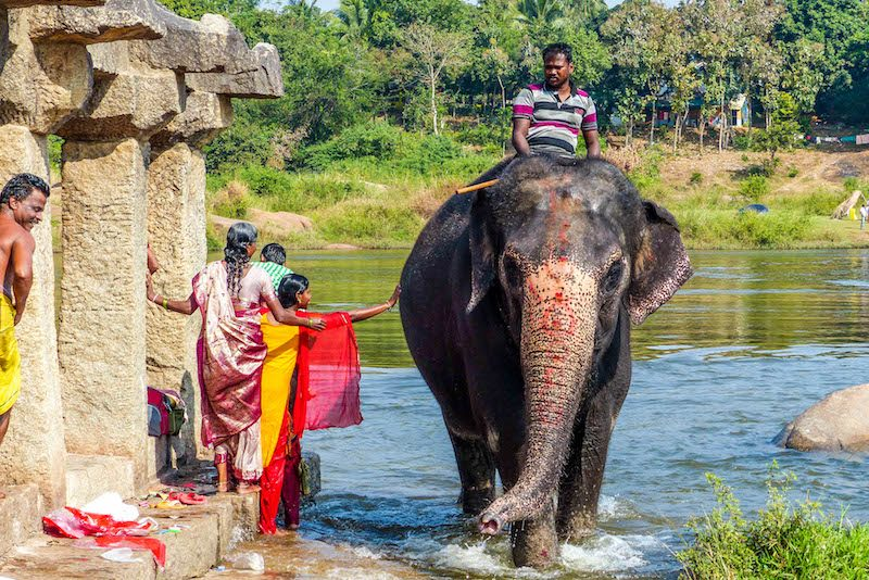 Elephant in river in Hampi while backpacking India