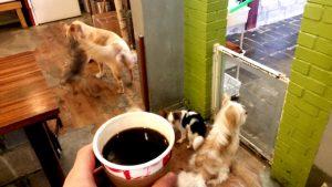 Kaffee mit Hunden