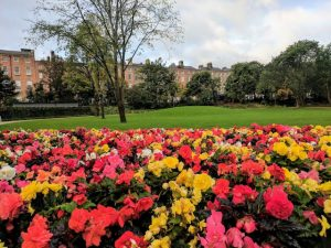 Merrion Square with flowers
