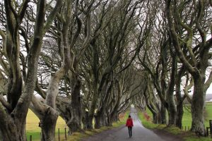 Road and trees in northern ireland