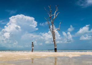 Baum und Strand auf Bahamas