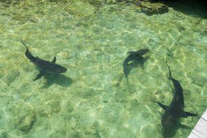 Kleine Haie im Wasser