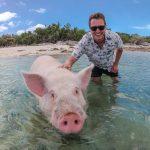 Schwimmende Bahamas Schweine: Alles zu den Schweinen der Karibik!